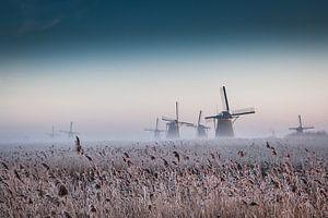 Molens in Kinderdijk in ochtendgloren van