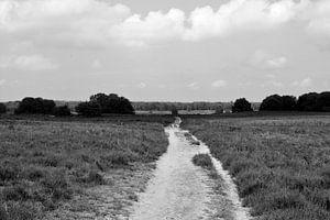 Über der Ermeloschen Heide in schwarz-weiß