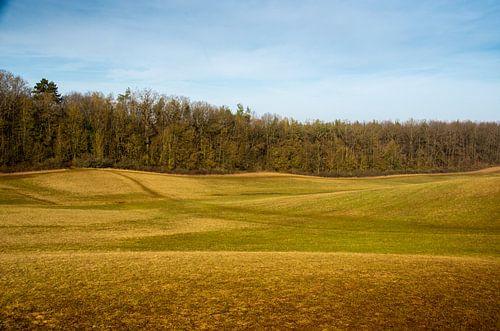 Hügelige Wiesen-Landschaft mit Waldrand im Hintergrund