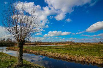 Landschaft einer Kopfweide in der Nähe eines Grabens in Giethoorn. von Maarten Salverda