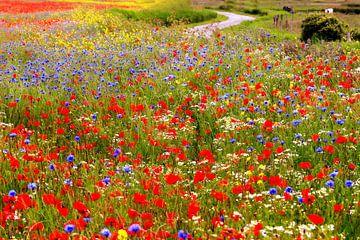 Blumenmeer in der Zeeland Landschaft von Els Fonteine