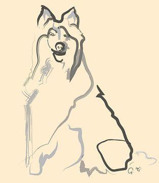 Hond Lassie van Go van Kampen