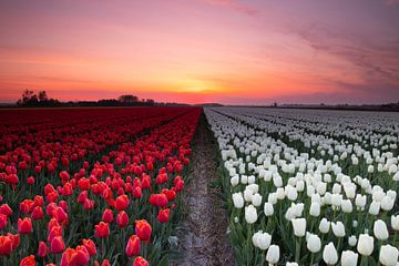 Rood-Wit van Peter Heins