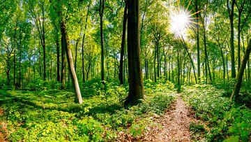 Grüner Wald von Günter Albers