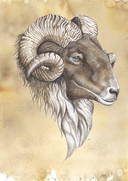 Drenthe-Heidekraut-Schafe von Jasper de Ruiter