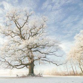 Winter Koning van Lars van de Goor