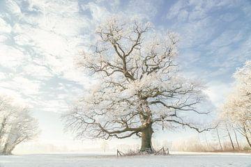 Winterkönig von Lars van de Goor