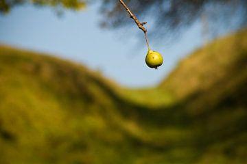 Pear von Mark Isarin | Fotografie