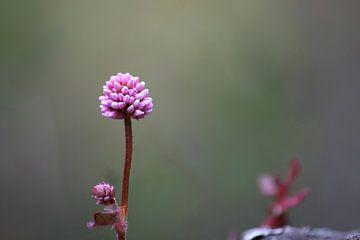 Roze bloem van Ingrid Meuleman
