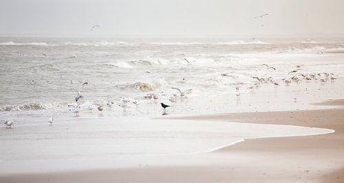 Vogels op zee van