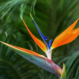 Paradijsvogel van Thomas Herzog