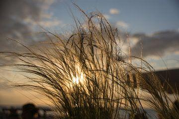 Sonntag Sonnenuntergangstag! von Manuel Declerck