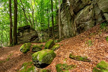 Mullerthal Trail II