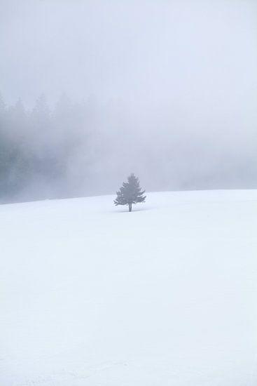 single tree on snow in fog