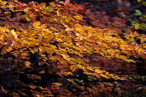 Herfst kleuren van Marcel Pietersen