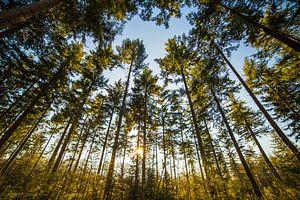 Into the Woods van Ralph vdL