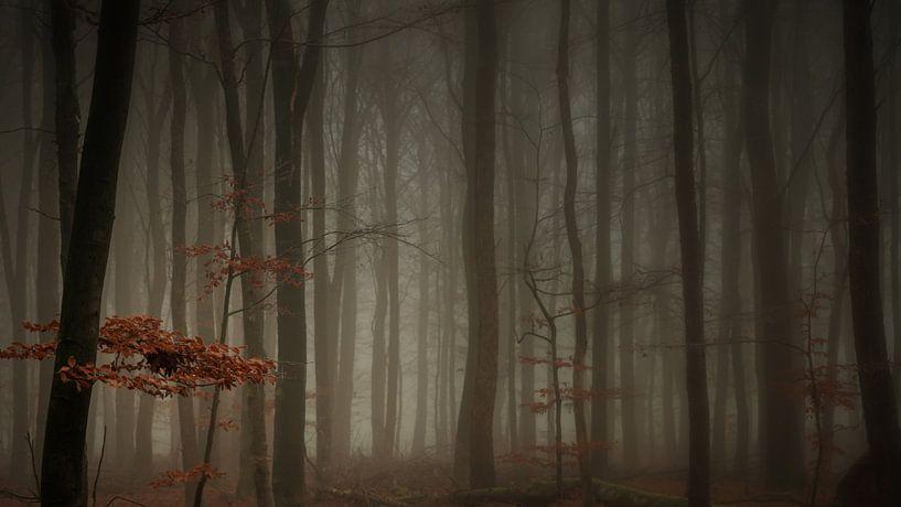 In a misty forrest (16:9) van Lex Schulte