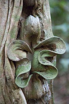 Natuurlijk kunstwerk in het regenwoud van Suriname van