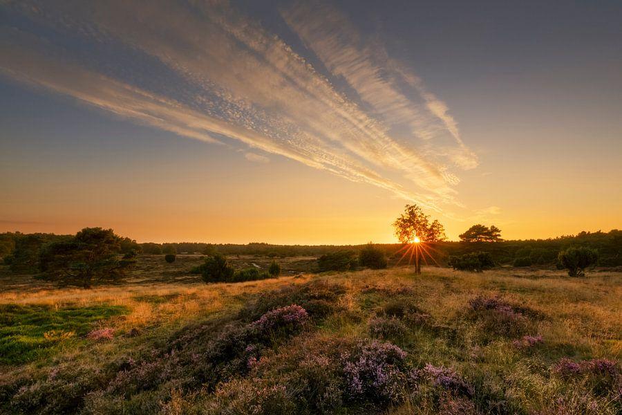 Zonsondergang op de bloeiende heide