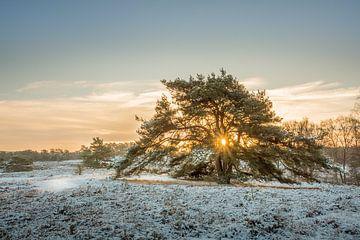 Winter op de Brunssummerheide van John van de Gazelle