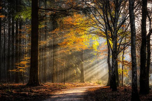 Speuldersbos in een herfstige morgen