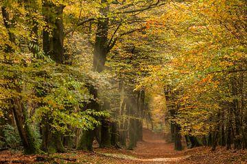 Kleurrijk herfstbos met lichtval van Peter Bolman