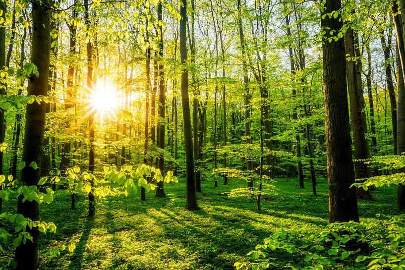 Forest at springtime van Günter Albers