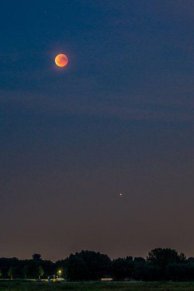 Blutsauger und Mars von Joost Potma