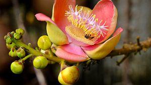 Tropische Blume von