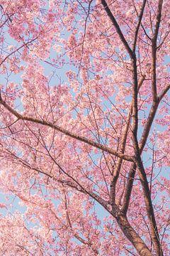 Bäume mit Kirschblüten von Mickéle Godderis