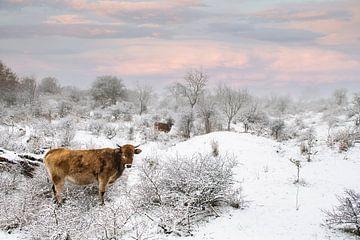 Wild rund in Zeeuws sneeuwlandschap van Paula Romein