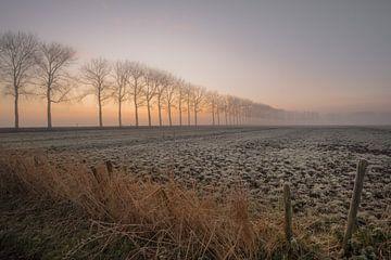 Eine Reihe von Bäumen von Moetwil en van Dijk - Fotografie