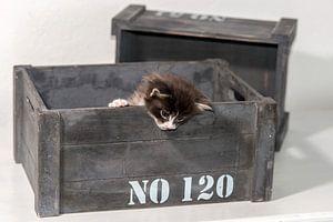 Kitten serie III