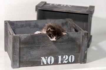 Kitten serie III van Rob Smit