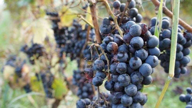 oh summer wine von Tina Hartung