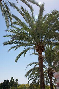 Palmboom van Bente Teertstra