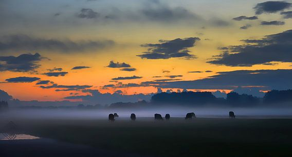 Koeien in de mist - Aarlanderveen, Nederland
