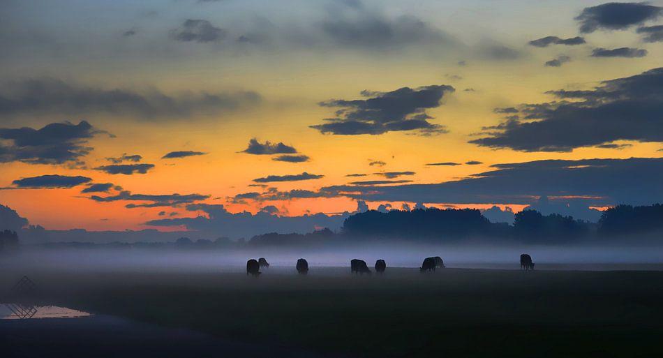 Koeien in de mist - Aarlanderveen, Nederland van Wim Goedhart