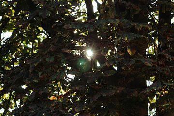 licht puntje van milan willems