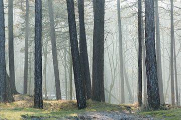 Ochtendlicht in het bos van Anneke Wapstra