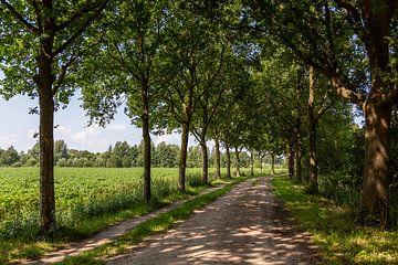 Endlose Wanderwege im Naturschutzgebiet der Kampina in den Niederlanden von Rik Pijnenburg