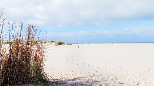 Het witte strand van Schiermonnikoog