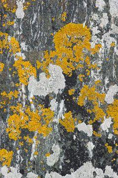 Abstract patroon van korstmossen op een rots. sur Ron Poot