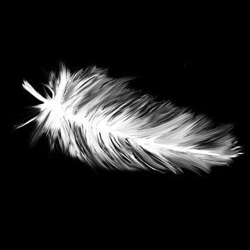 Daunenfeder auf schwarzem Hintergrund von Emiel de Lange