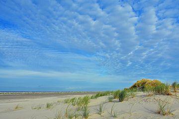 The Dunes sur Paul van Baardwijk
