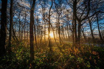 sunrise von Johan Vet