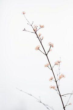 Takje met kleine bloemen, 1x Studio III van 1x