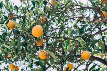 Appelsienen Boom van Patrycja Polechonska