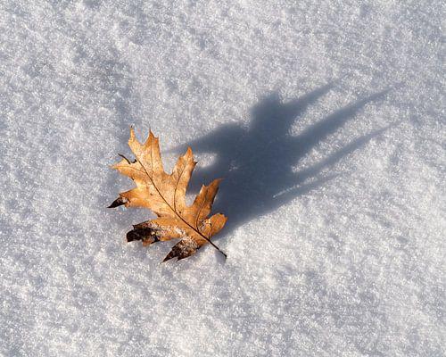 Eikenblad in de sneeuw