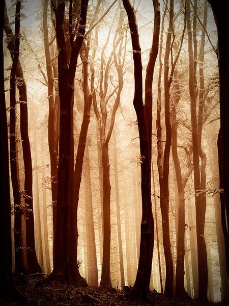Mistig bos in bruintinten. van Mark Scheper